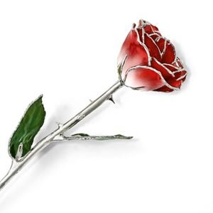 Picture of Platinum Red White Rose