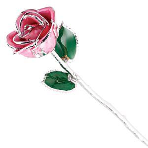 Picture of Platinum Pink Rose