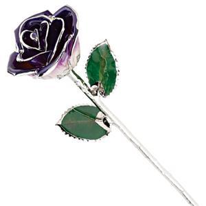 Picture of Platinum Purple White Rose