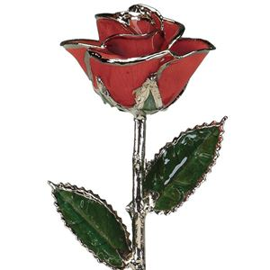 Picture of Platinum Red Rose