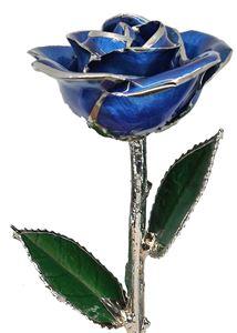 Picture of Platinum Rose Dark Blue
