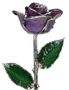 Picture of February-Platinum Rose
