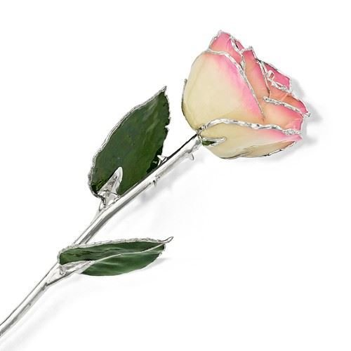 Picture of Platinum White Pink Rose